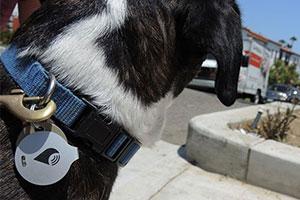 TrackR Dog